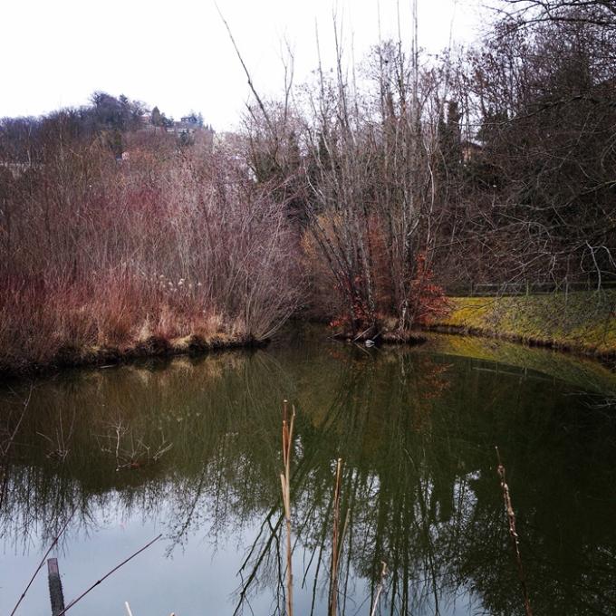 L'étang en dormance près de chez nous